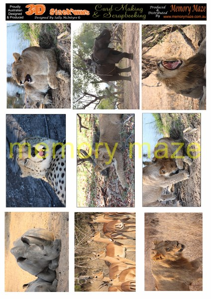 mostly cats african animals  sold in 5