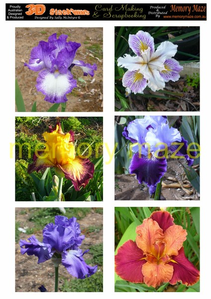DS0710 halcyon iris  min buy 5  can be cut out with your nested