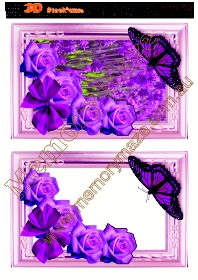Purple rose with butterfly